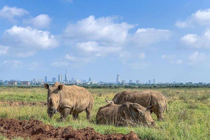 Nairobi National Park Half Day Tour with David Sheldrick (All Inclusive Tour)