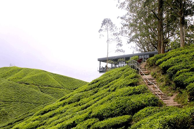 Cameron Highlands Tour From Kuala Lumpur (Special Deal)