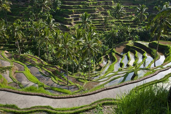 Best of Ubud Attractions : Private All-Inclusive Tour