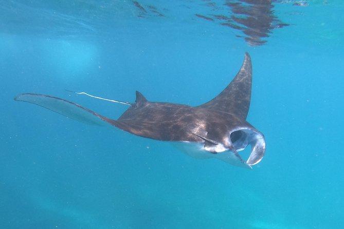 Three Island Snorkeling Trip