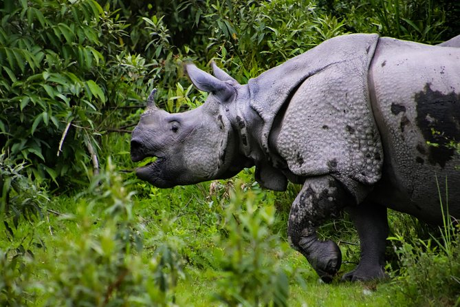 Kaziranga Wildlife Tour From Guwahati