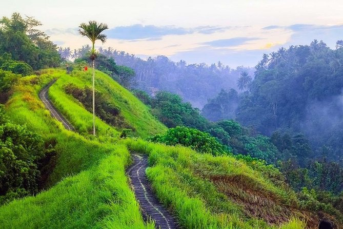 Ubud Countryside Tour: Campuhan Ridge Walk, Rice Terrace, and Coffee Plantation