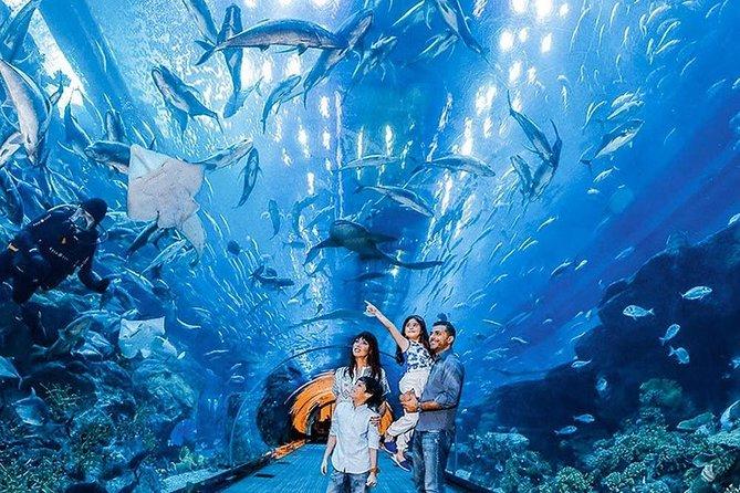 Dubai Aquarium & Underwater Zoo Ticket With Transfer