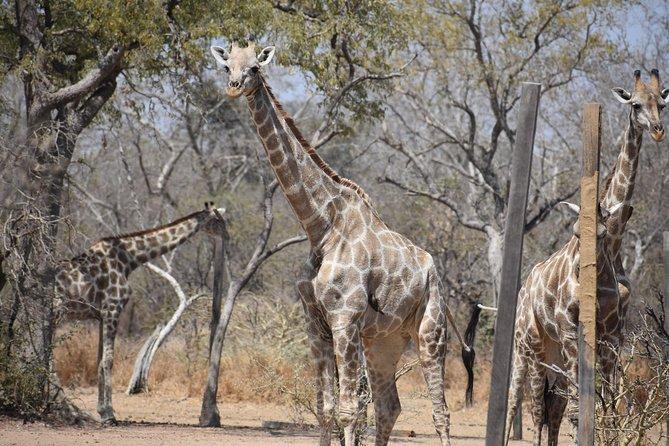 Into the Wild - Yankari Game Reserve