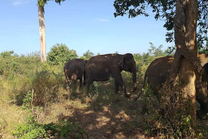 Yala safari from galle and surroundings