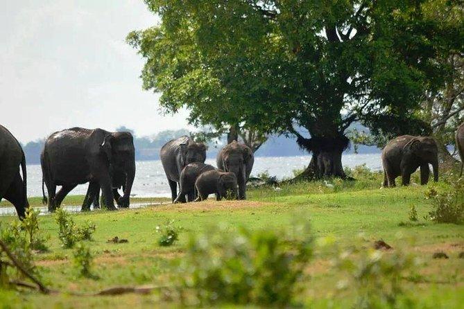 Sigiriya and Dambulla Day Tour