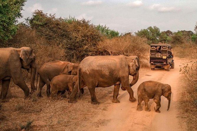 Udawalawe Wildlife Safari & Waulpane Limestone Caving day tour from Colombo