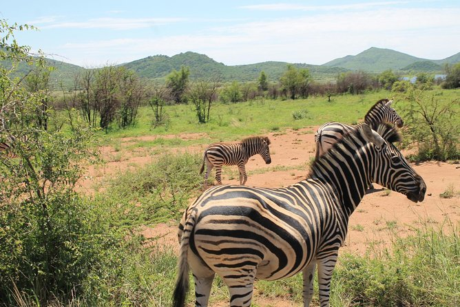 Pilanesberg National Park Safari from Johannesburg photo 6