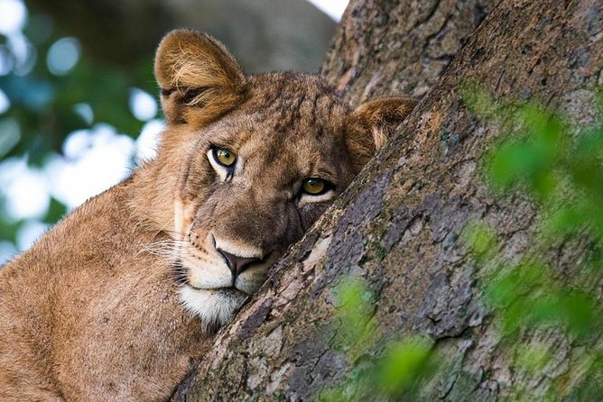 3 days Queen Elizabeth National park wildlife safari