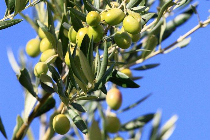 Half-Day Alpilles and Olive Oil tasting from Avignon