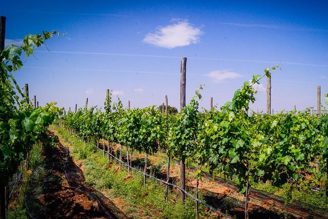 Wineries tour and wine tasting