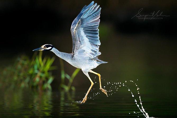 Costa Rica Bird Photography Tour