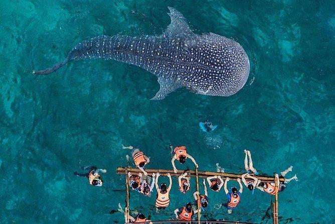Private Cebu Day Tour: Oslob Whaleshark & Tumalog Falls (Sumilon Island)