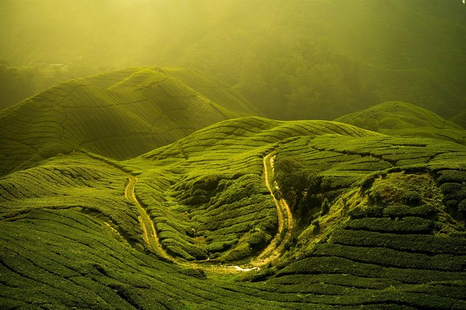 Private Full-Day Cameron Highlands Nature Tour with with Lunch
