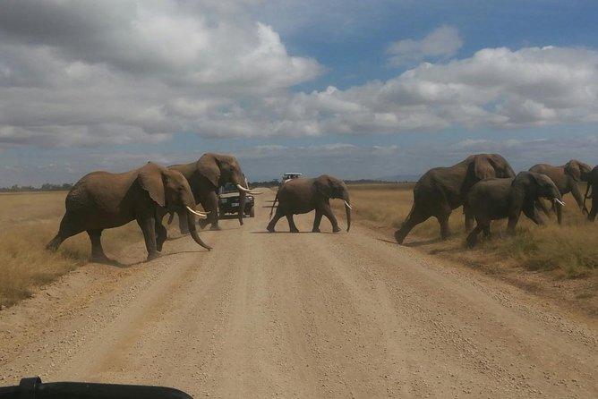 Jumbo Trail Safari 4x4 Gold