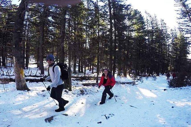 Bogd Khan National Park Hiking Day Trip