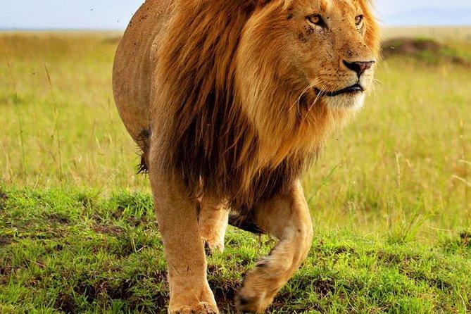 Mikumi Safari,Masai Tour,Walking Inside the Park