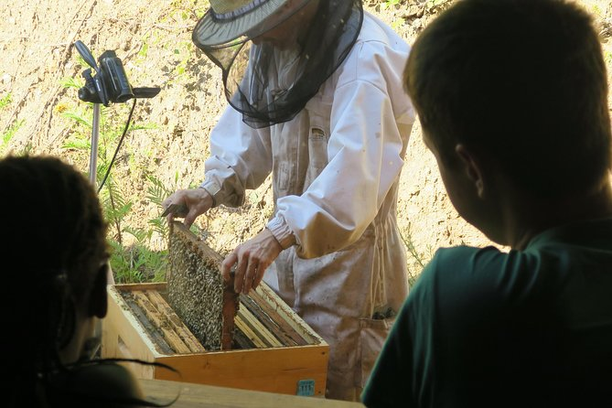 Visit - immersion in the heart of the bee world!
