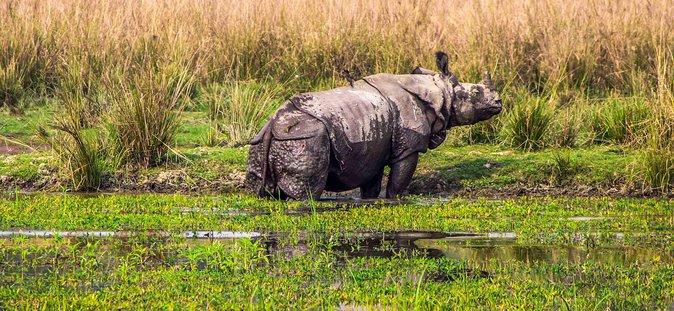 National Park- Manas, Kaziranga 4N/ 5D (Deluxe)