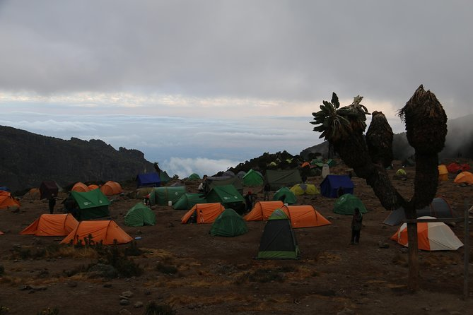 8 Days Climb Mount Kilimanjaro via Lemosho Route