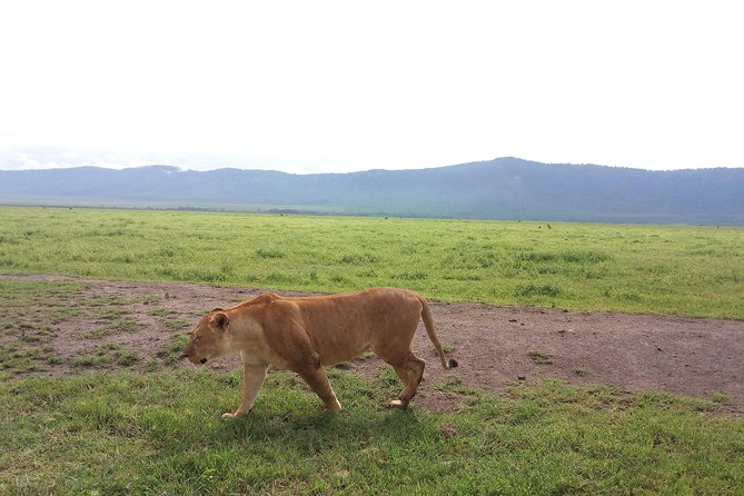 Taste of Kenya 4 Days Private Tour from Arusha with Pick Up