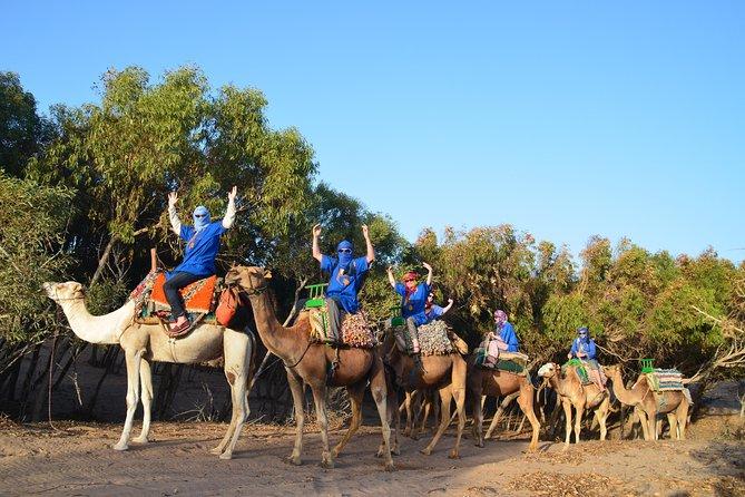 Essaouira: 2 hour ride 1 person per dromedary