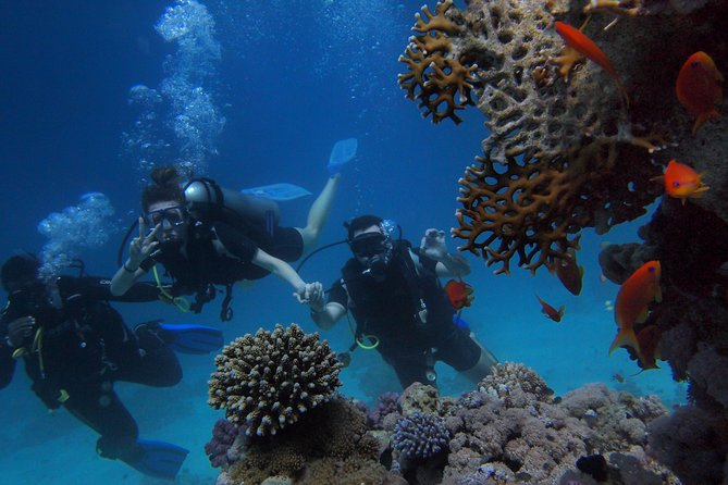 2 Days Mombasa package _ City tour and Marine Park Visit
