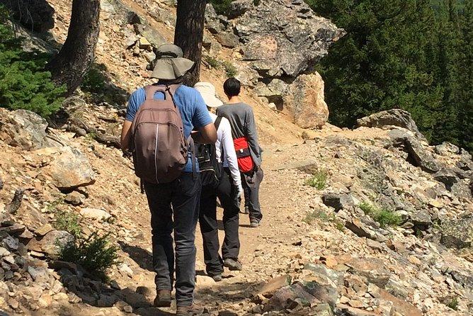 Yellowstone Wildlife & Hiking Combo Adventure