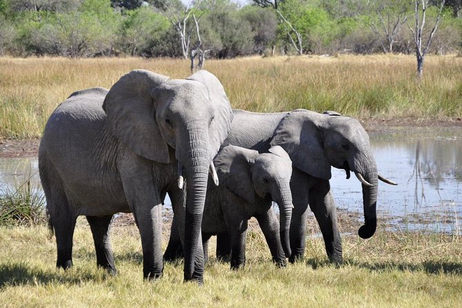Safari Half-Day -Natal Lion Park, Tala Game Reserve, Phezulu Centre from Durban
