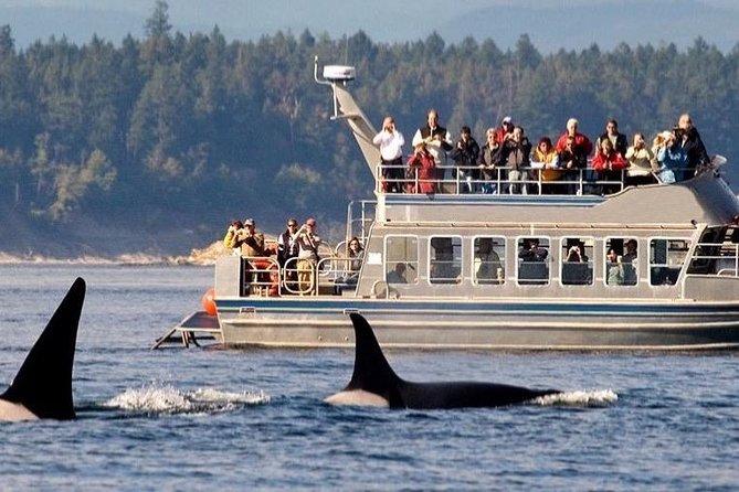 Whale watching tour to Mirissa From Hotels - Galle, Hikkaduwa, Bentota