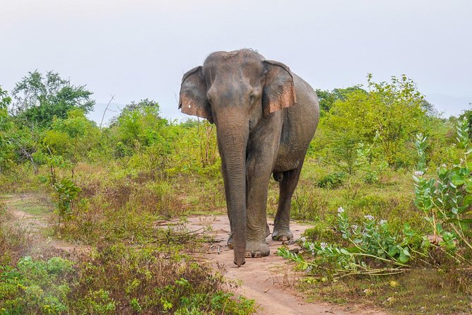 All Inclusive Udawalawa National Park Day Tour From Negombo