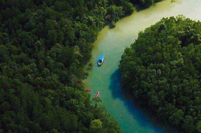 Eco-Mangrove Boat Cruises