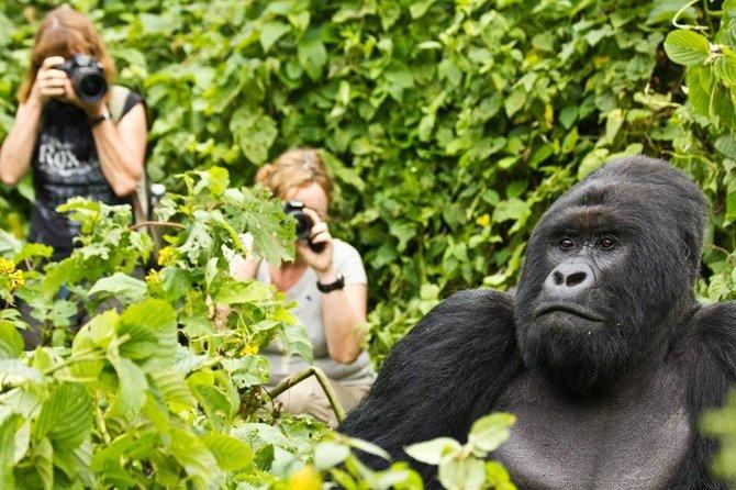 6 Days Gorilla & Chimpanzee Safari in Rwanda