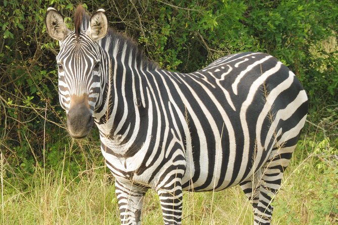1 Day Lake Mburo National Park Safari Private Tour