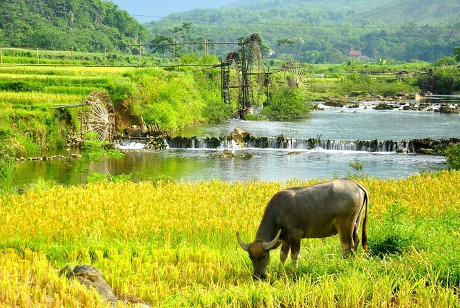 Amazing Pu Luong Nature Reserve 2 Days Tour from Hanoi