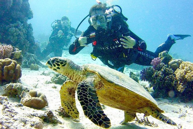 Full-Day Scuba Diving in Hurghada with Equipment and Pick Up