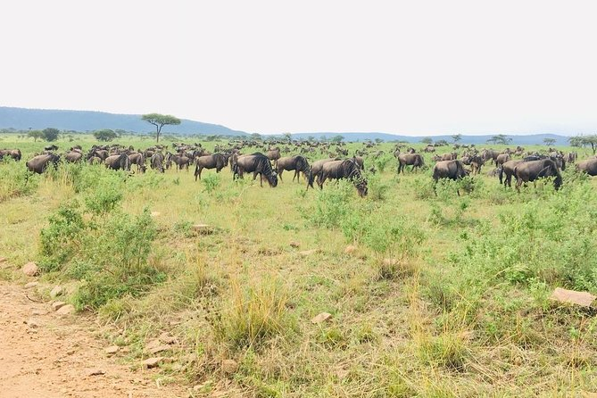 3 Days Tanzania Luxury Safari To Serengeti