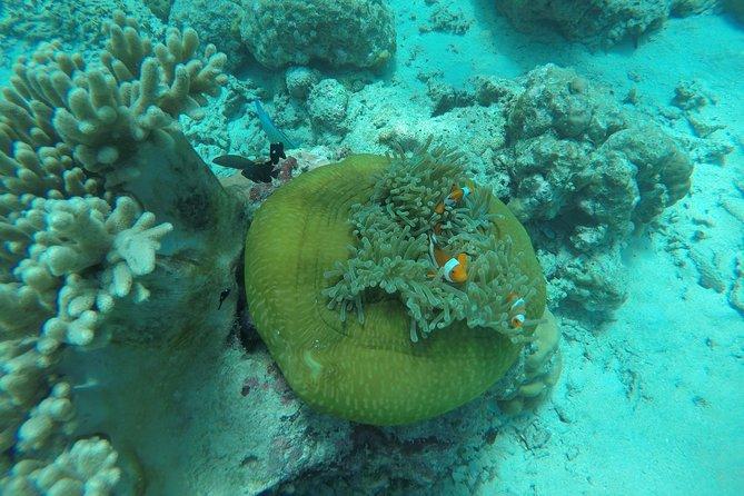 Diving Menjangan Island 1 day trip by Pemuteran Dive Adventures