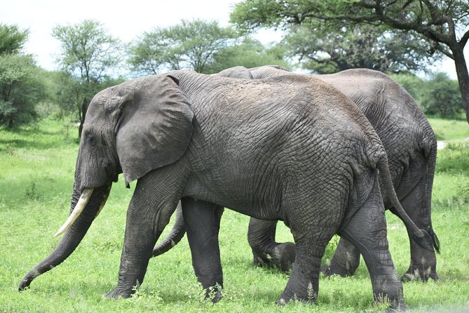 5 DAYS BUDGET SAFARI ( Tarangire, Ngorongoro Crater & Serengeti National parks)