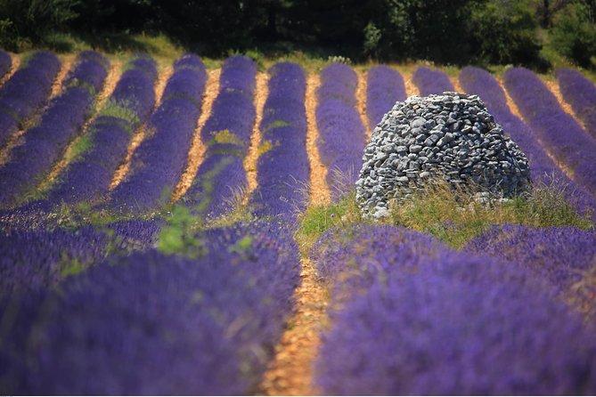 Halve dag lavendelweg in Sault vanuit Avignon