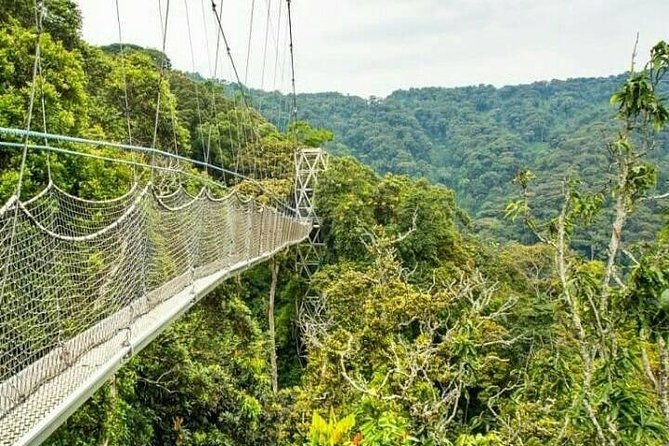 Private Full-Day Tour to Nyungwe National Park Canopy Walk-Way
