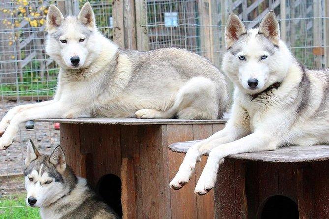 Summer: Visit Reindeer Farm & Husky park