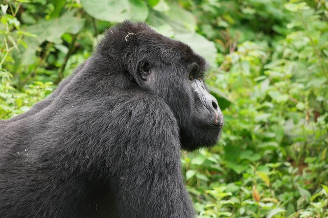 4 Days Bwindi Gorilla Trekking And Lake Mburo Safari