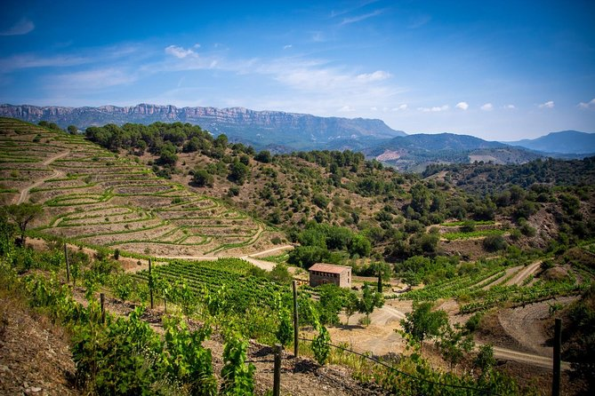 Discover the amazing wines from Priorat with a sommellier