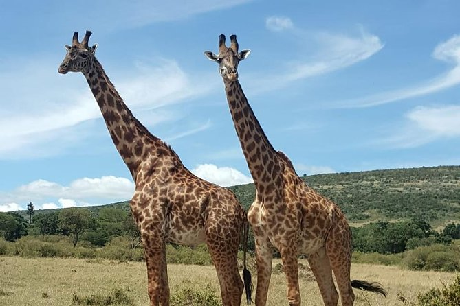 Day trip to Lake Nakuru National Park from 0600hrs(am) to 1900hrs(pm).
