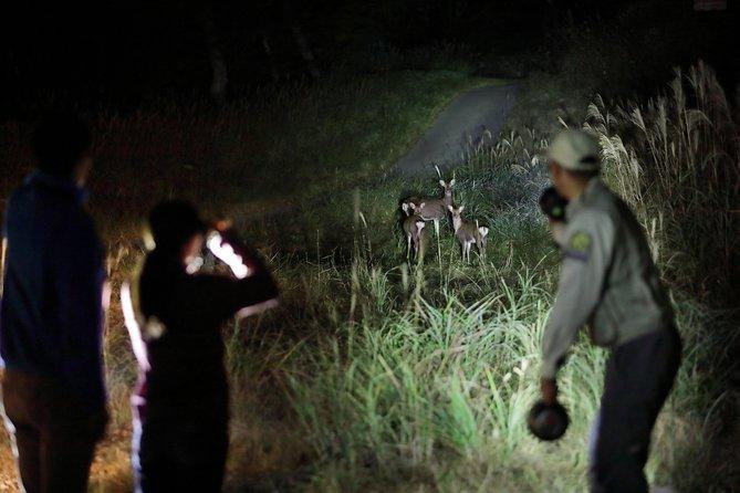 Wildlife Night Drive