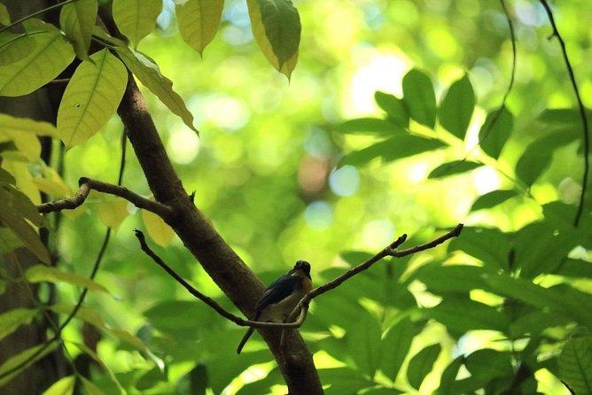 Udawatta Kele Sanctuary Bird Watching and Trekking from Kandy