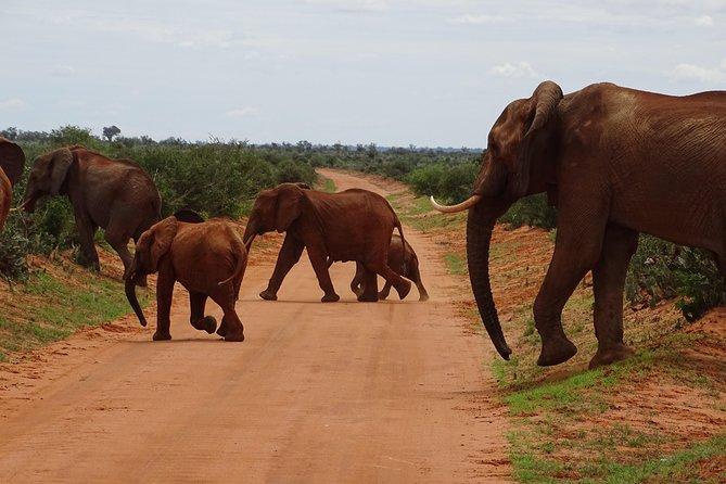 Overnight Safari to Tsavo East, Meet the Red Elephant of Tsavo East