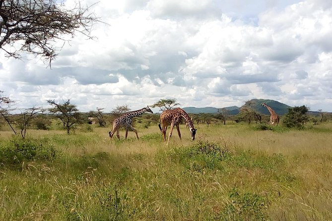 8 Days Private Safari Trip Serengeti and Zanzibar from Arusha