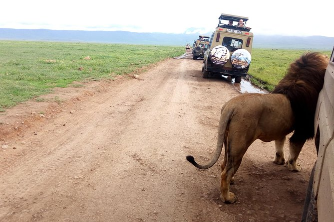 5 Days Private Trip National Parks and Lion Safari from Arusha